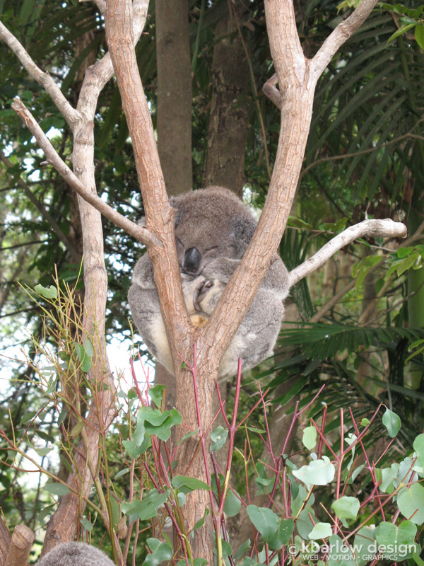 Currumbin Wildlife Sanctuary, Australia