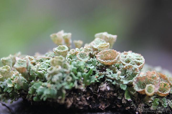 lichen | kbarlowdesign.com